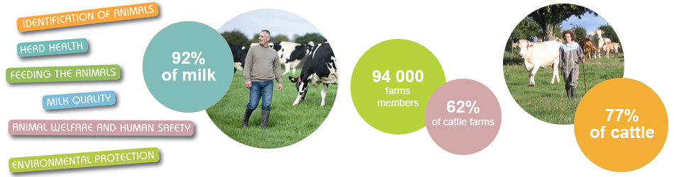92% of milk, 94 000 farms members, 62% of cattle farms, 77% of cattle